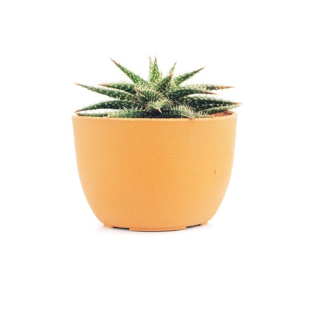 Plant in a pot isolated on white background Stock Photo - 10736677