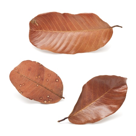 Tropical dry leaves set isolated on white  photo