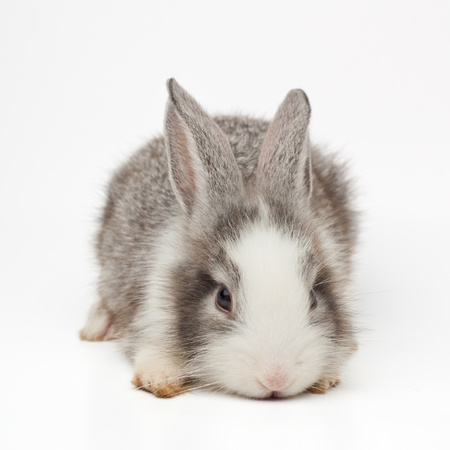 Cute bunny Stock Photo - 13814612
