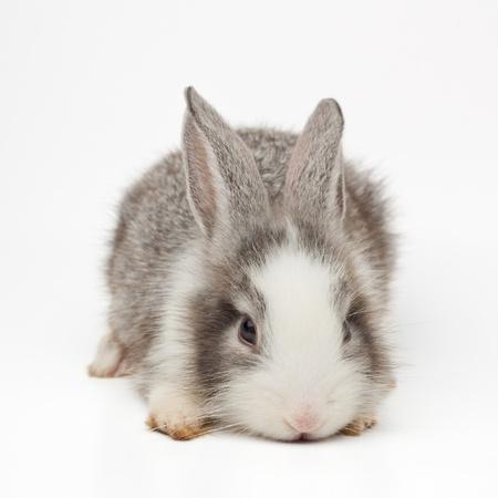 Cute bunny Stock Photo - 13814612