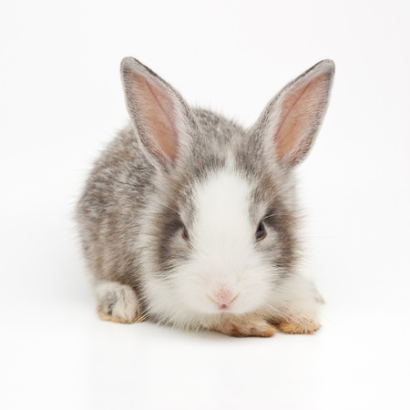 Cute bunny Stock Photo - 13814605