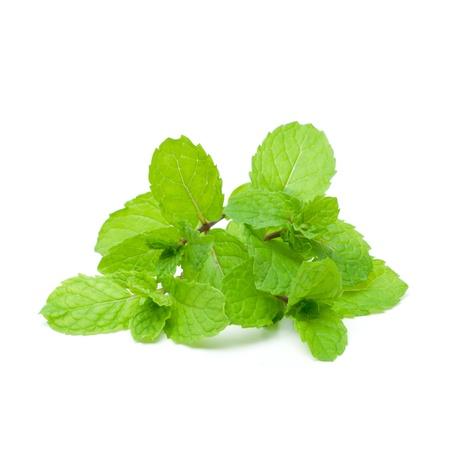Mint aromatic herbs Banco de Imagens