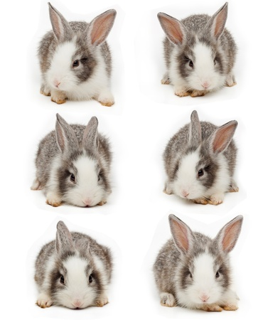 Little rabbit Stock Photo - 14231119