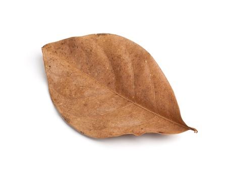 dode bladeren: Tropische droge bladeren op wit wordt geïsoleerd Stockfoto