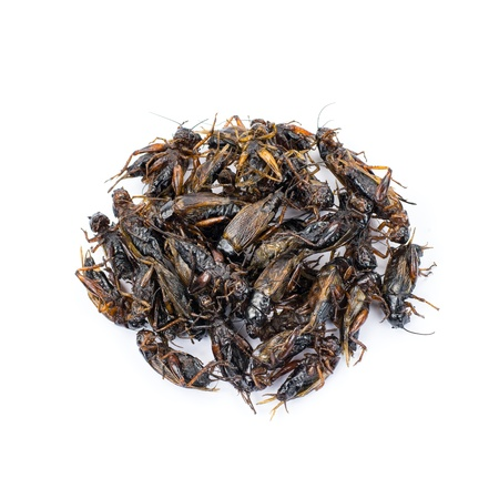 Fried insects isolated on white background photo