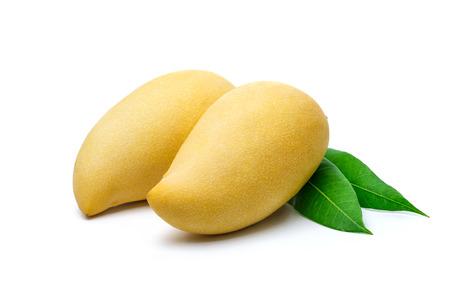 Sweet golden mango isolated on white background