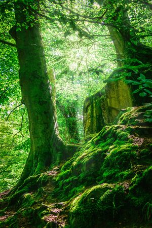 fairy forest: Mountain forest and trees with moss in magic light. Filtered image: colorful effect. Stock Photo