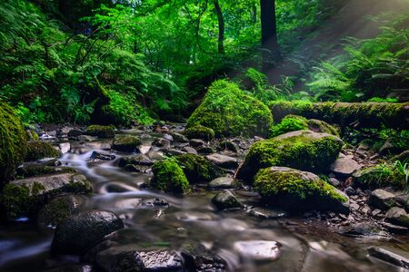 rock: Forest stream running over mossy rocks. Filtered image: colorful effect.