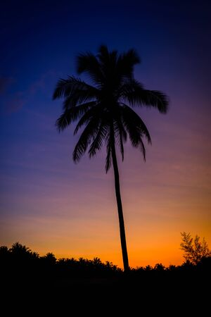 palmier: Silhouette coconut palm trees at twilight time