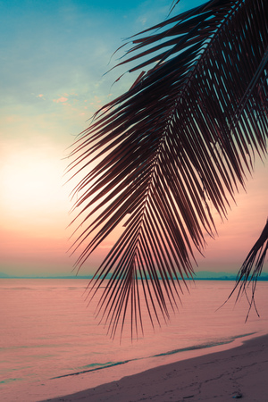 human palm: Silhouette coconut palm trees on beach at sunset. Vintage tone. Stock Photo