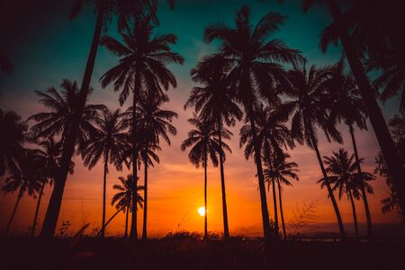 tree leaves: Silhouette coconut palm trees on beach at sunset. Vintage tone. Stock Photo