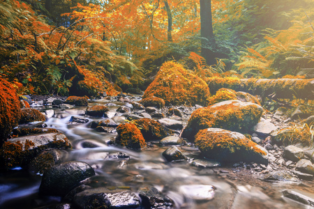 forest stream: Forest stream running over mossy rocks. Filtered color effect. Stock Photo