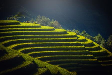 蒼チャイ、YenBai、ベトナムの日の出のテラスでの水田。 写真素材
