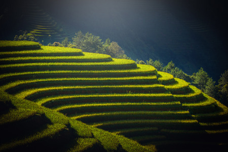 Rice fields on terraced at sunrise in Mu Cang Chai, YenBai, Vietnam.