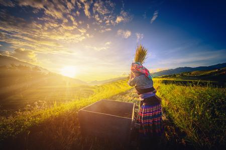 MU 倉チャイ、ベトナム、2017 年 9 月 21 日: 女性農家が稲刈りフィールドで Mu 倉チャイ、ベトナム北西部の夕日。 報道画像