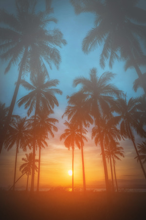 Silhouette coconut palm trees on beach at sunset. Vintage tone. Stock Photo