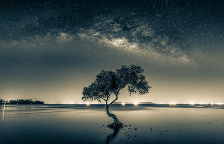 Black and white image of Night sky with stars and silhouette mangrove tree in sea. Long exposure photograph. Stock Photo - 114534949