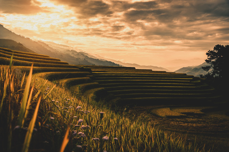 Rice fields on terraced with wooden pavilion at sunrise in Mu Cang Chai, YenBai, Vietnam. Stock Photo