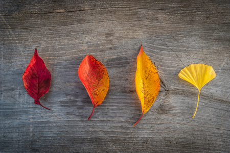 Colorful autumn leaf on wooden table background. Stock Photo
