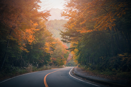 The road passing between the trees with autumn foliage. Stock Photo - 114535052
