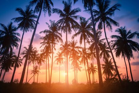 Silhouette coconut palm trees on beach at sunset. Vintage tone. Stock fotó