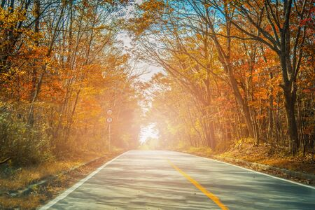 The road passing between the trees with autumn foliage.