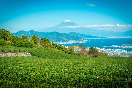 Landscape image of Mt. Fuji with green tea field at daytime in Shizuoka, Japan.