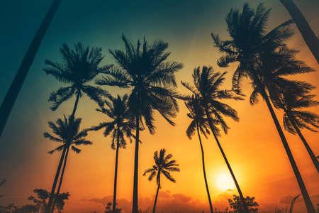 Silhouette coconut palm trees on beach at sunset. Vintage tone. 版權商用圖片