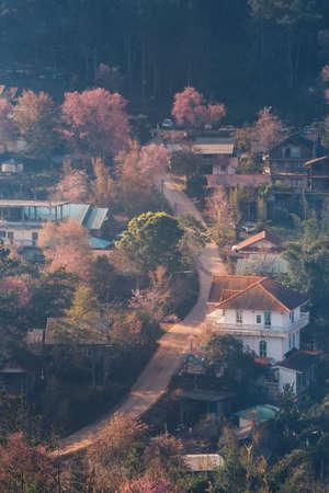 Rong Kla Village and Sakura Tree at sunrise in Phu Hin Rong Kla National Park, Phitsanulok province, Thailand