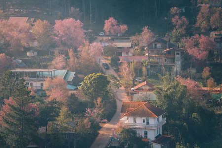 Rong Kla Village and Sakura Tree at sunrise in Phu Hin Rong Kla National Park, Phitsanulok province, Thailand Stock fotó