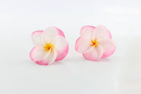 White with pink Plumeria flower two flowers placed on a white background. photo