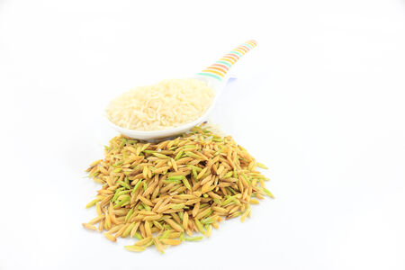staple food: Rice is an important economic crop plants in Thailand and is also consumed as a staple food.