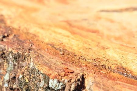 innate: Superficie dei ceppi degli alberi della foresta � tagli distruttivi.