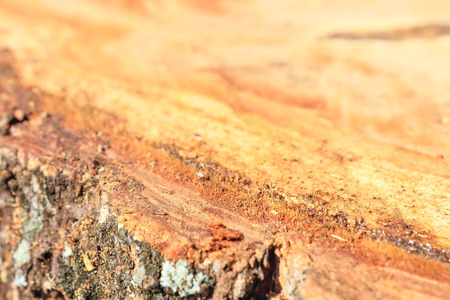 innate: Surface of the Tree stumps in the forest is Destructive cuts.