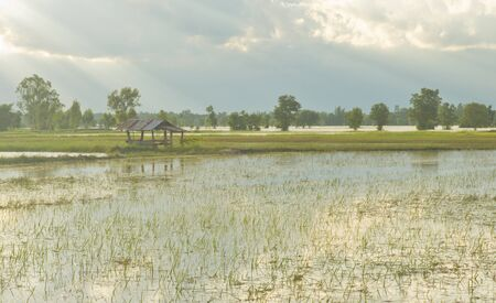 The farmhouse in the middle of rice fields damaged by floods.