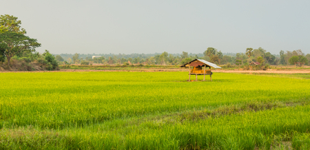 The cottage is located in a rice field in the middle of jasmine rice field in the countryside of Thailand. Imagens