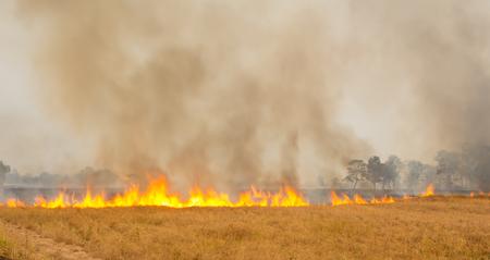 Farmers burn rice stubble in the dry season. Reklamní fotografie