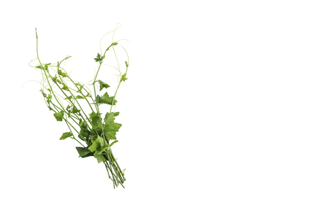 Properties of Coccinia are herbs that help relieve flatulence, antacid, help expel and nourish the eyes.