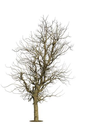 Tree  isolated on white background Banque d'images