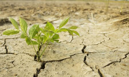 Small trees that grow in Salty soil and dry soil