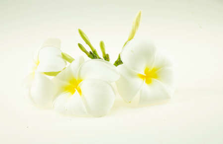 Plumeria flower isolated on a white background 免版税图像 - 159138349