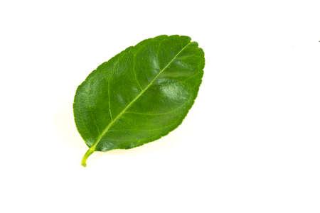Citrus leavesisolated on white background 免版税图像