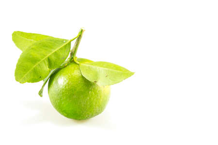Lime green isolated on white background.