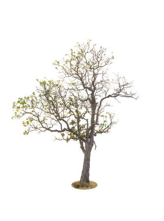 Tree  isolated on white background 免版税图像