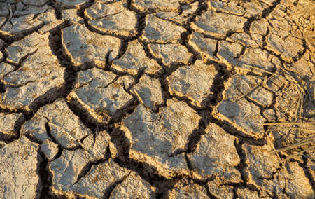 Surface cracking due to drought