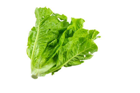 Cabbage lettuce isolated on white background