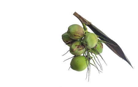 Young coconut isolated on white background 免版税图像