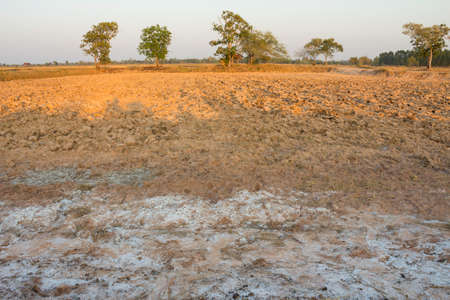Rural soils in the northeastern part of Thailand that have a salt deposits due to degradation and lack of fertility.