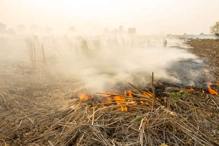 Farmers burn straw to prepare to plow and sow rice. 免版税图像