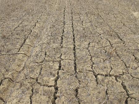 barren: Barren ground